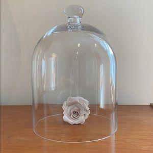 Glass cloche / dome / bell jar